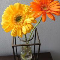 西の玄関に黄色い花を飾ると良いそうな...