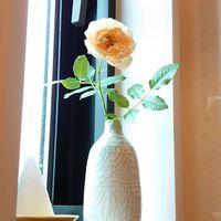 今日のトイレの窓のお花は、薔薇のあか...
