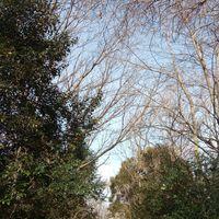 淀川沿いをサイクリング🚵 木々に隠れた...