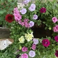 春から初夏の花にうっり変わり カラフル...