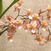 1本の花枝は満開になりました。他の枝に...