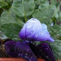 今日は朝からしとしと雨で、寒い一日で...