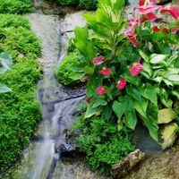 フラワードームには熱帯植物が花を咲か...