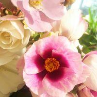 剪定薔薇の生け花🌹