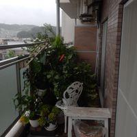 7月18日、今日も雨、梅雨が続いてい...