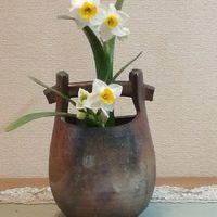 「日本水仙2株」20200128 花の重さで折れ...