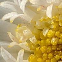 近くで見ると花の中に小さい花が。。。😥
