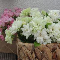 グリーンアイスの花束💐 切り花を飾って...