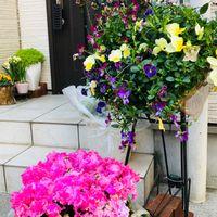 2020-2-24 リースな花が🌼💐🌸だいぶ咲きま...