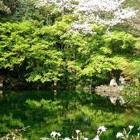 富士山本宮浅間大社の湧く玉池。 桜と紅...