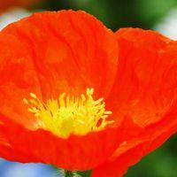 私たちを励ましてくれる赤い花。