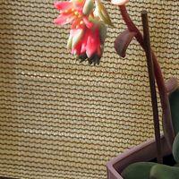 花が咲きましたಡ ͜ ʖ ಡ
