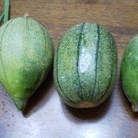 17日に収穫しました~♪ 野菜うりです🎵