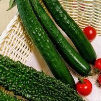 7月6日🥒🍅収穫!