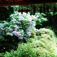 7/4大聖寺境内からお庭を眺む まるで、...