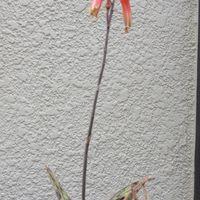 小さな可愛いオレンジ色の花が咲きまし...