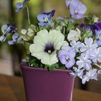 もう一枚💜 庭の小さな花たち。