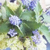 ルバーブの花 キャットニップの葉っぱと...
