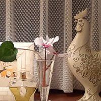 シクラメンの花🌸、一茎の葉を🍀飾って  ...