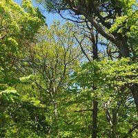 春の若葉が美しい薬師山コース