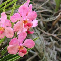 沖縄東南植物楽園のパンダ?