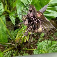 熱帯植物  神代植物公園