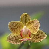 今、胡蝶蘭は 養生中です、が これはそ...