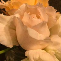 フロウトワ 切り花種のヒョロ苗から