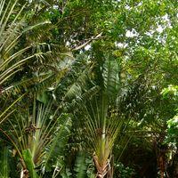 シダの洞窟近辺の植物 カウアイ島