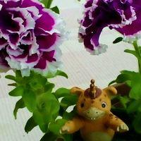 白と紫の混合の『八重咲きペチュニア』...