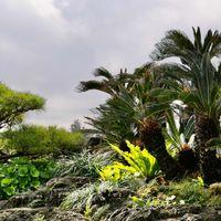 在りし日の首里城の庭 沖縄本島