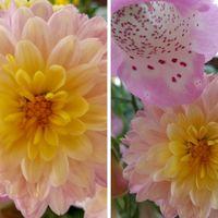お仏壇の花を活けてたら、あまりに可愛...