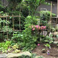 ③庭先に3つの野菜畑が揃った姿...  ・...