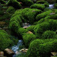 苔むした岩 思いでの一枚 緑々の美