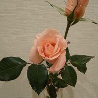 切り花で飾りました  イーハトーブの風