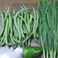 パプリカ❓️を初収穫‼️ これはパプリカで...