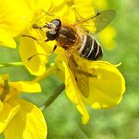 2021年4月 ミツバチは忙しそう。 今年も...