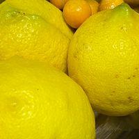 ラストのレモン3つ、全部収穫しました🍋...