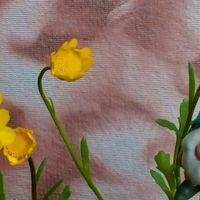 マイペースで開花中の『ノースポール』😂...