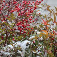 1月12日は、兵庫県南部も雪が降りまし...