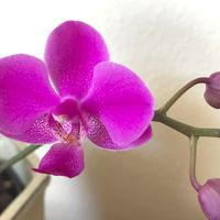 6/22撮影:ささやかながら2回目の花が...