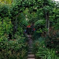 今朝のバラの庭 この時露の冷え込みで、...