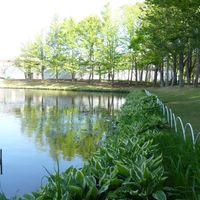 池のまわりにぐるっと、斑入りのホスタ...