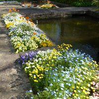 お花の絨毯v この場所は日当たりがいい...