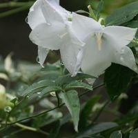 🏠今週の庭から・・雨に濡れ、しっとりと...
