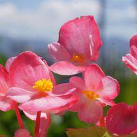 🏠一昨日の庭のお花たち・・🌼🌳 今はまだ...