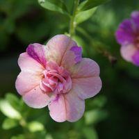 🏠一昨日の庭のお花たち・・🌼🌳