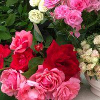 朝の花束 7 「名残りの二番花たち」