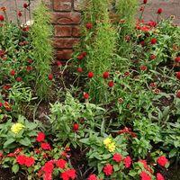 優秀庭園賞の植栽202106インパチェンス...