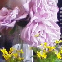 6月18日、ブルームーンの最後の花をカッ...